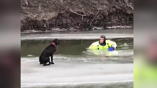 ABD'de buz tutan nehirde mahsur kalan köpek kurtarıldı (DHA)
