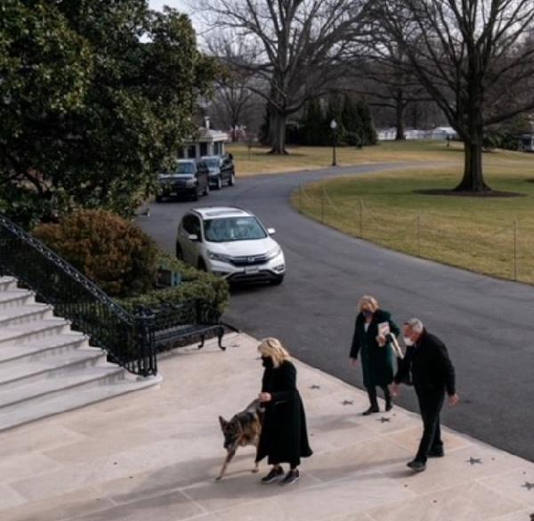 Joe ve Jill Biden'ın köpekleri Beyaz Saray'a geldi (DHA)