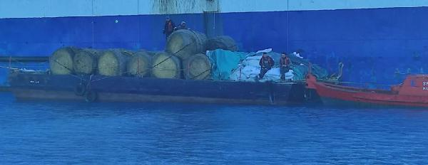 KKTC, 2 bin 776 hayvanı denizde telef olmaktan kurtardı (DHA)