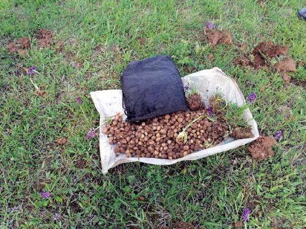 Salep soğanı toplayan 4 kişiye 321 bin TL ceza! 1 – b7a6f2e84f7ee52f0a13773ce08e2074
