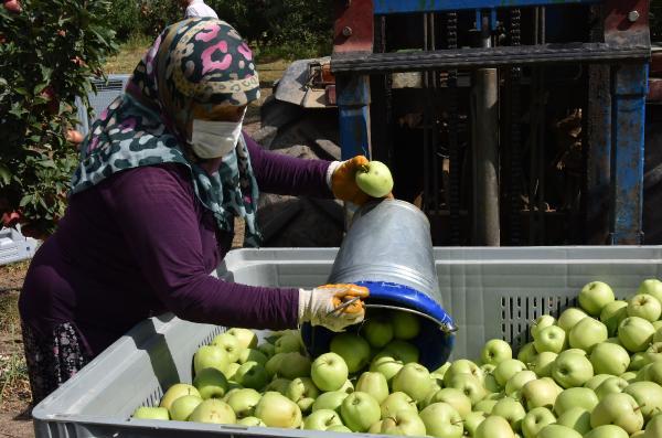 ISPARTA'NIN EGIRDIR ILCESINDE ELMA HASADI BASLADI. BU YIL ILCEDE 400 BIN TON REKOLTE BEKLENIYOR.(FOTO:ISPARTA-DHA)